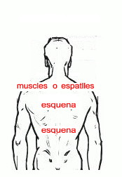 Espatlla, muscle, esquena